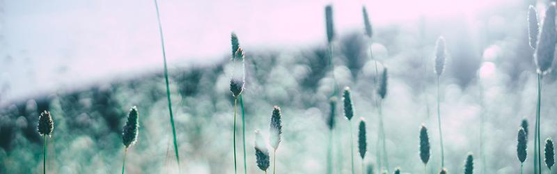 huskurer-mot-pollenallergi
